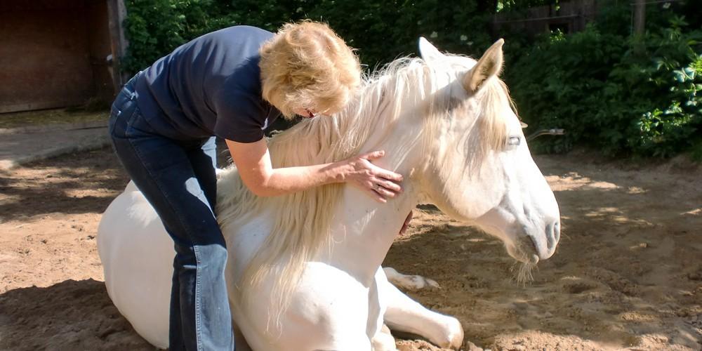 Brigitte Metzner Naturheilkunde für Pferde und Kleintiere, Luhden